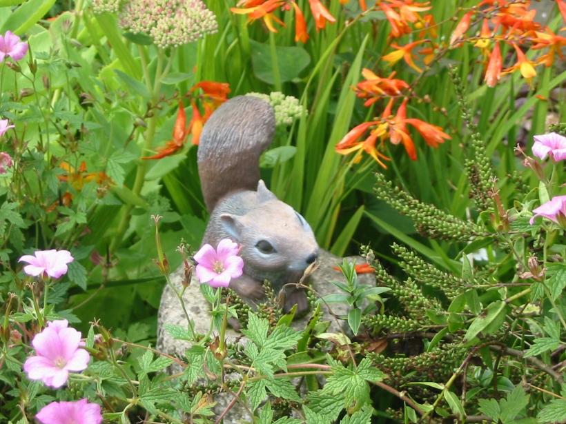 a squirrels